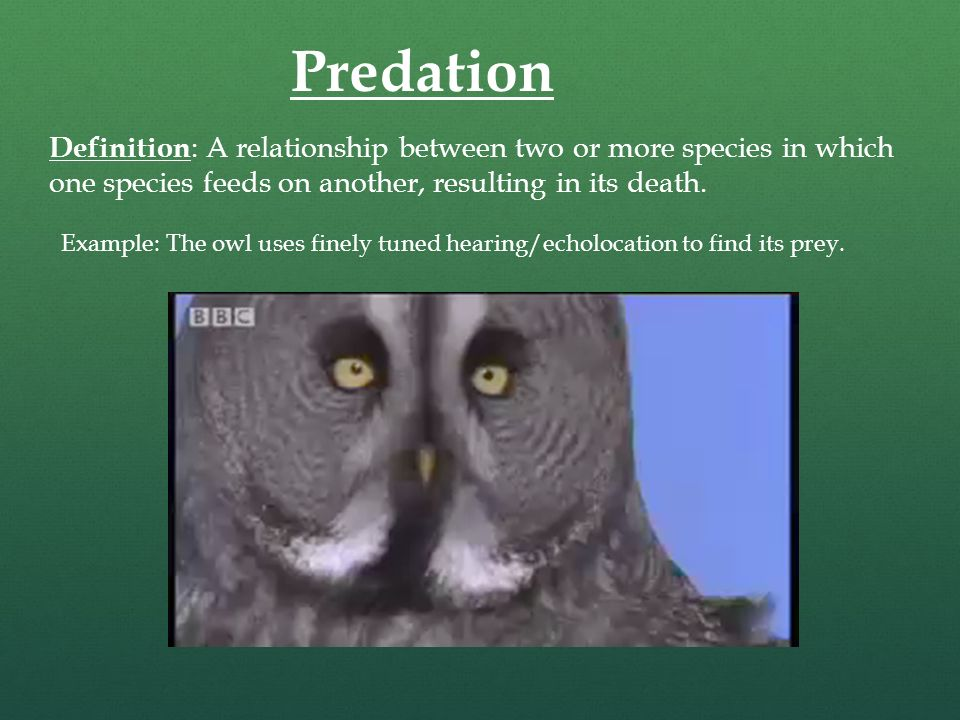 Predation Definition : A Relationship Between Two Or More Species In Which  One Species Feeds On
