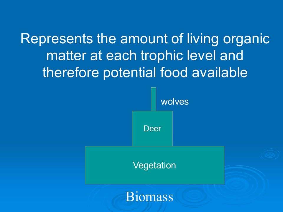 Biomass: total amount of organic matter in an area.