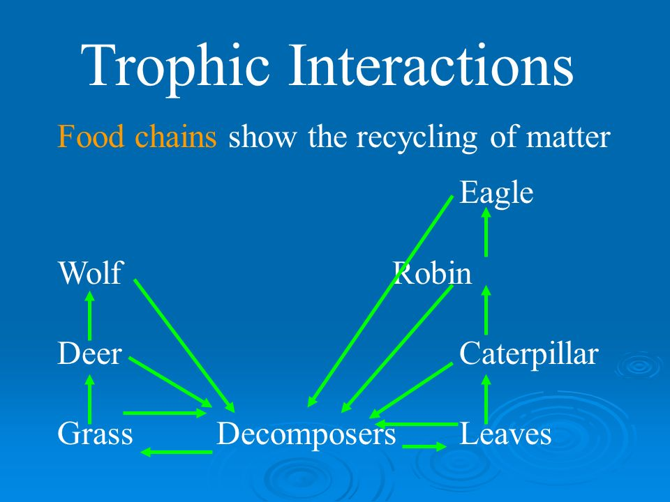 Trophic Interactions Food chains Eagle WolfRobin DeerCaterpillar GrassLeaves Name the trophic levels