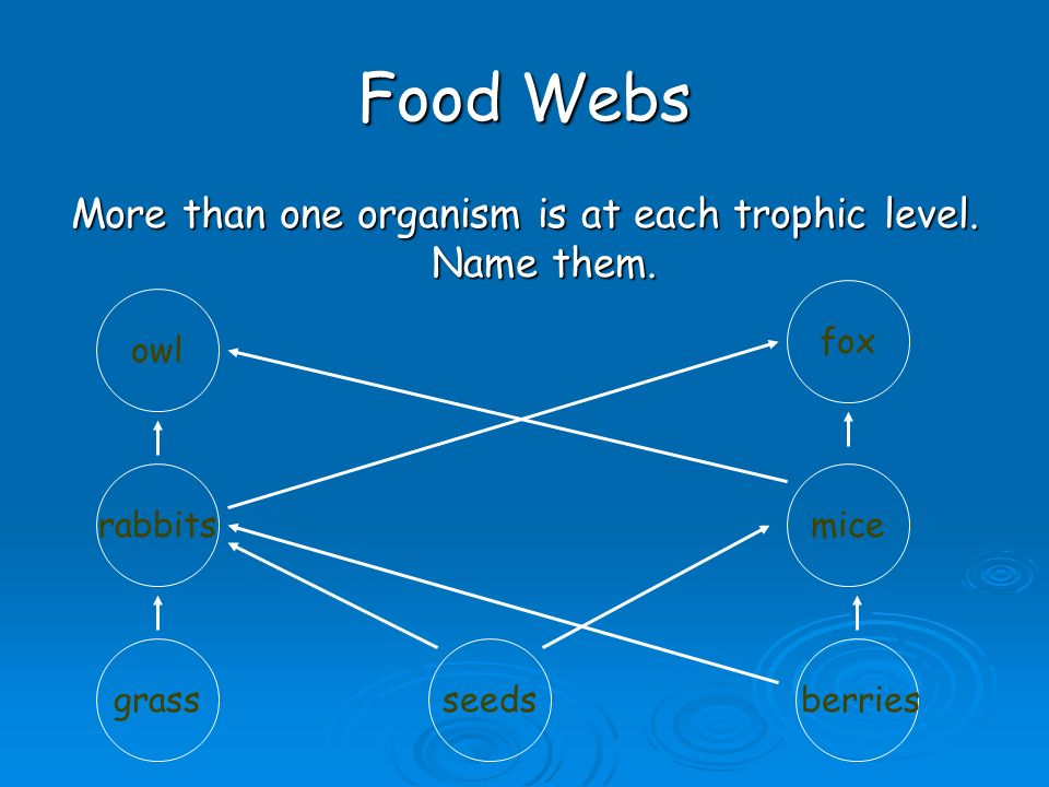Food Webs  Animals may eat more than one thing, so they belong to more than one food chain.