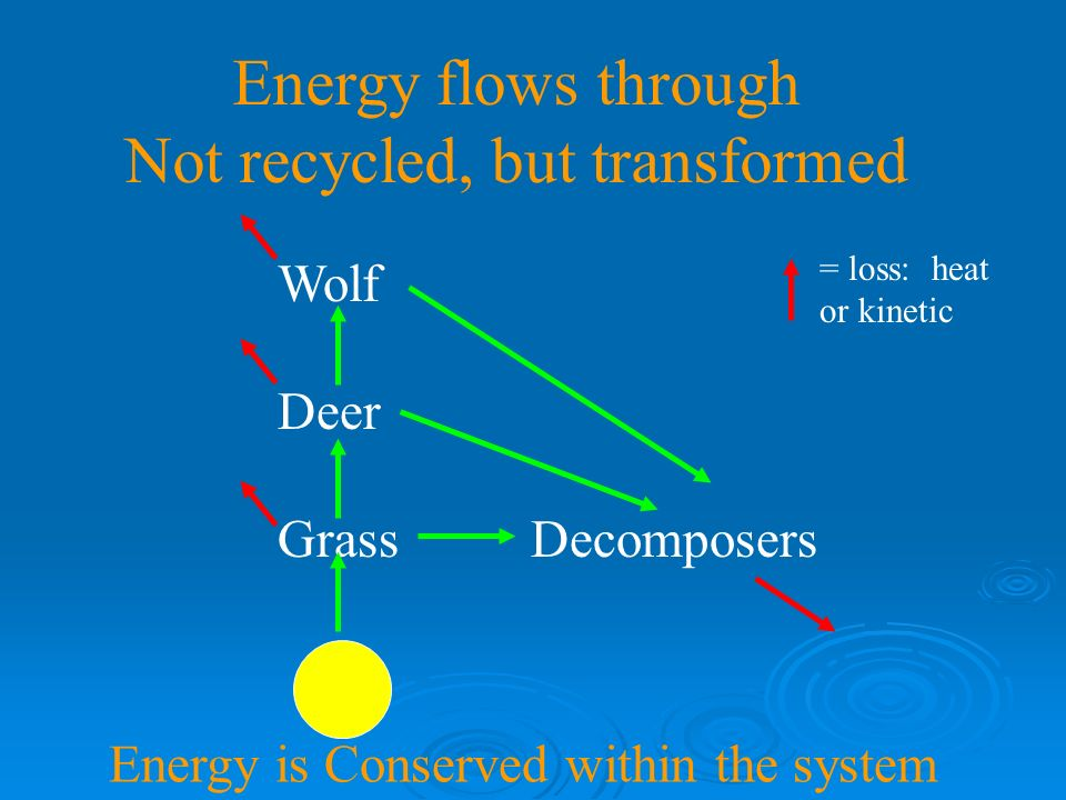 Food chains recycle matter Wolf Deer Grass Decomposers Example: Carbon Matter is Conserved within the system