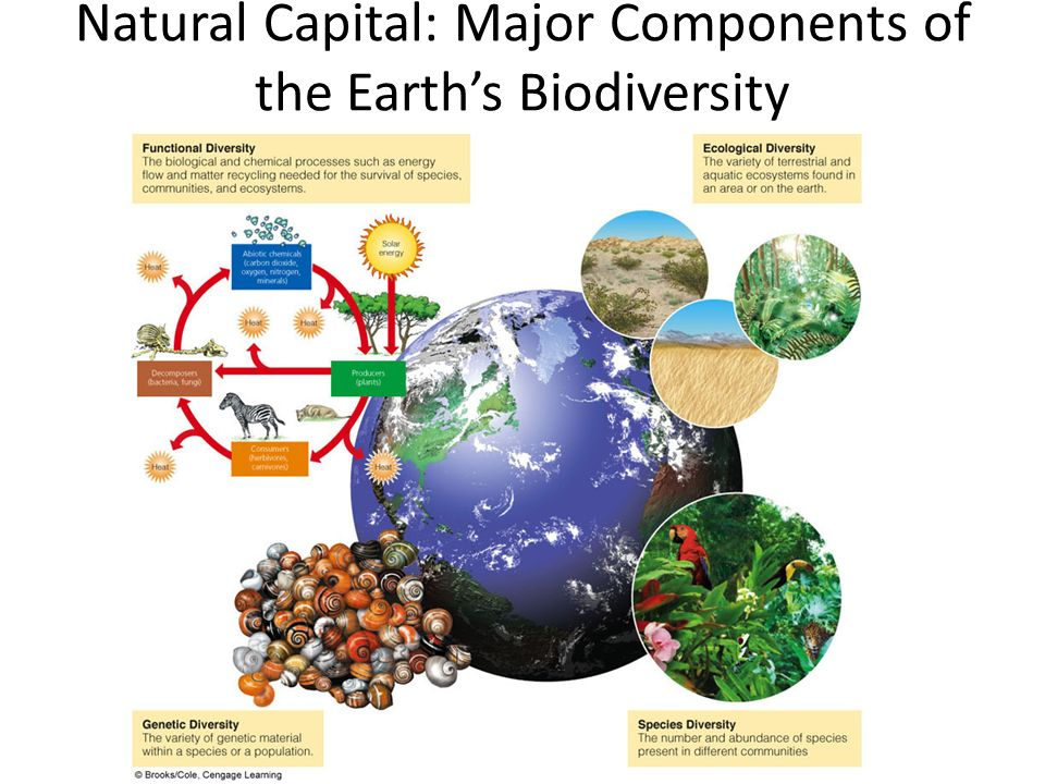 Natural Capital: Major Components of the Earth's Biodiversity