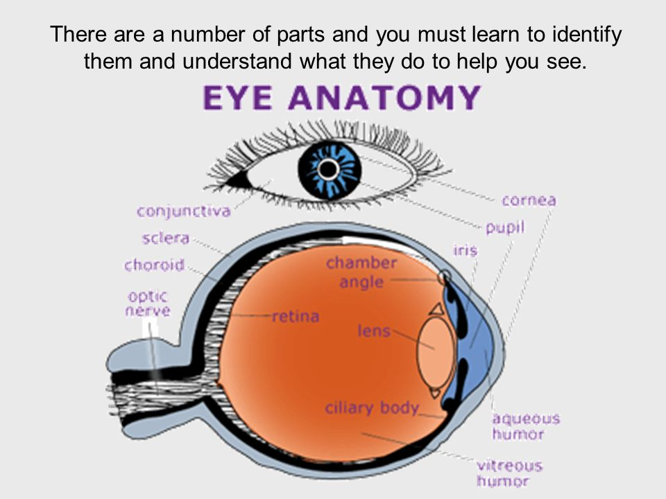 Nice Eye Anatomy Sclera Ideas - Anatomy And Physiology Biology ...