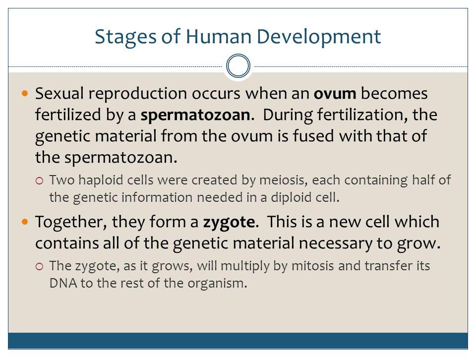 stage of human development