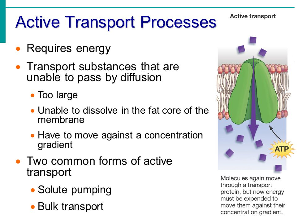 an overview of the process of transport through cell membranes Cell transport webquest link 1 – cell transport overview and membranes 1 what is meant by cell transport 2 defend this statement: living organisms must be able.