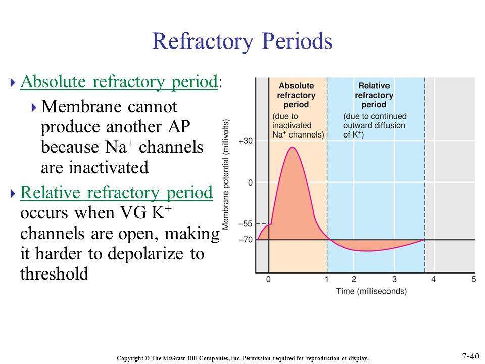 Refractory Period Viagra