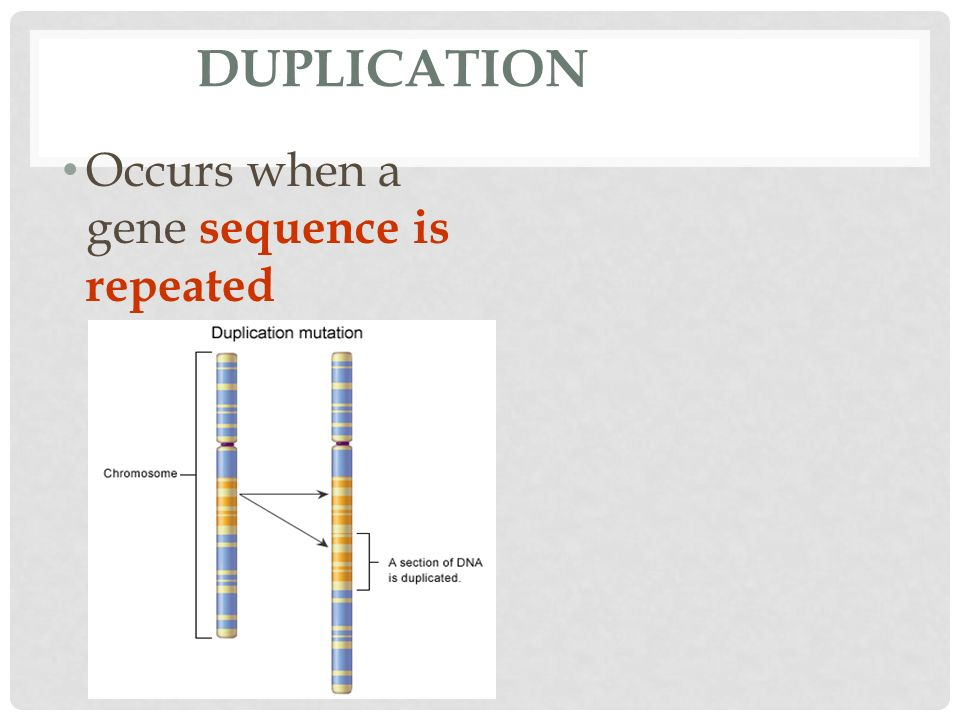 DUPLICATION Occurs when a gene sequence is repeated