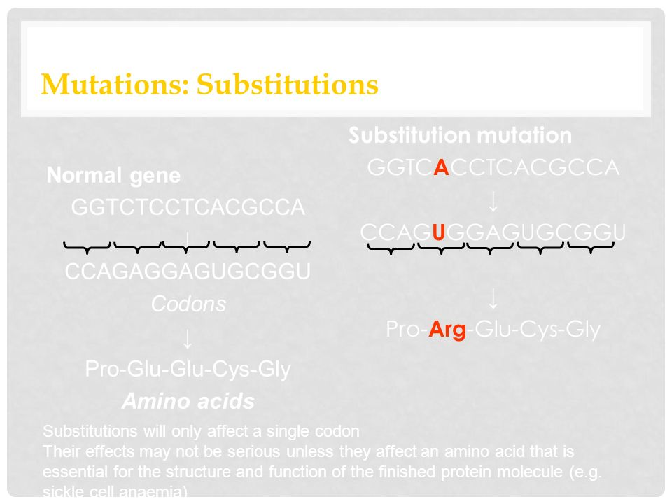 Mutations: Substitutions Substitution mutation GGTC A CCTCACGCCA ↓ CCAG U GGAGUGCGGU ↓ Pro- Arg -Glu-Cys-Gly Substitutions will only affect a single codon Their effects may not be serious unless they affect an amino acid that is essential for the structure and function of the finished protein molecule (e.g.