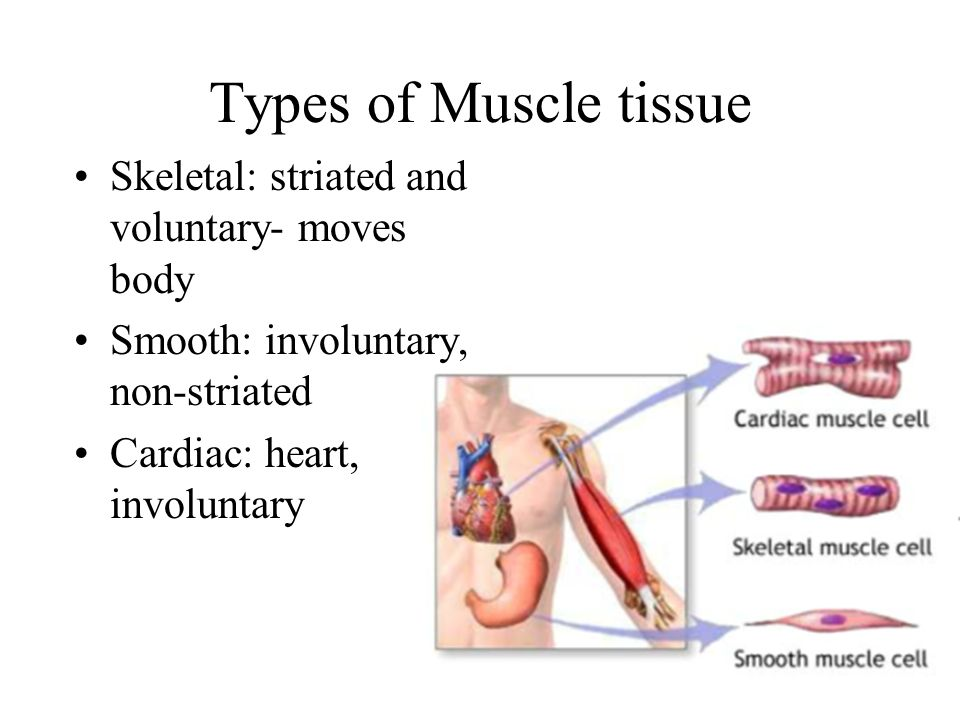 three type of muscle tissue The four types of tissues muscle tissue type of tissue that is capable of contracting and generating tension in response to stimulation produces movement.