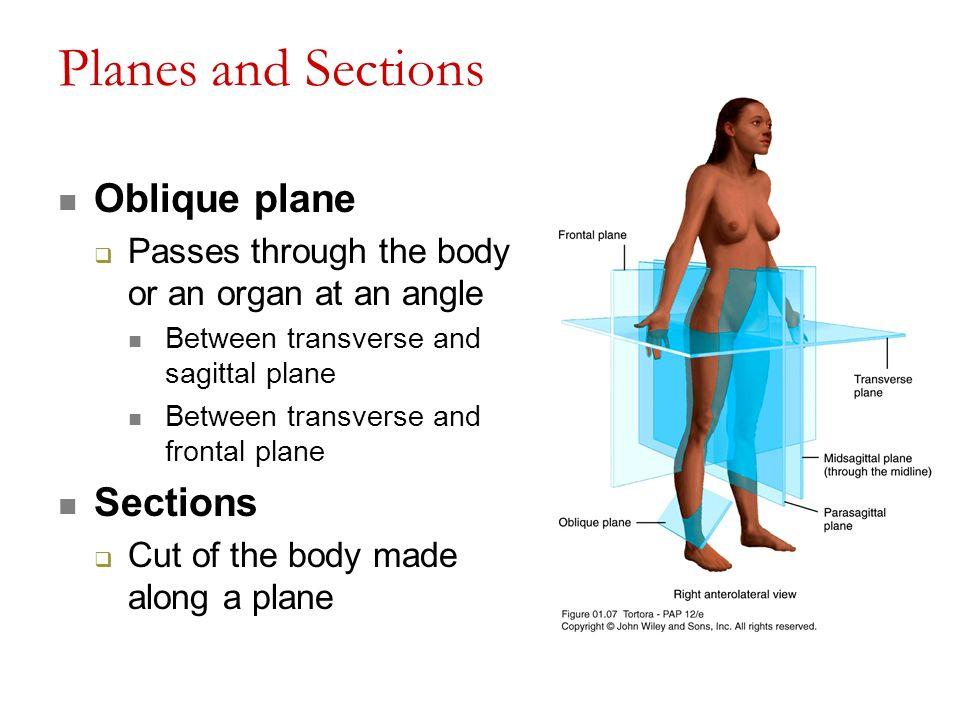 Attractive Oblique Cut Anatomy Image Collection - Anatomy Ideas ...