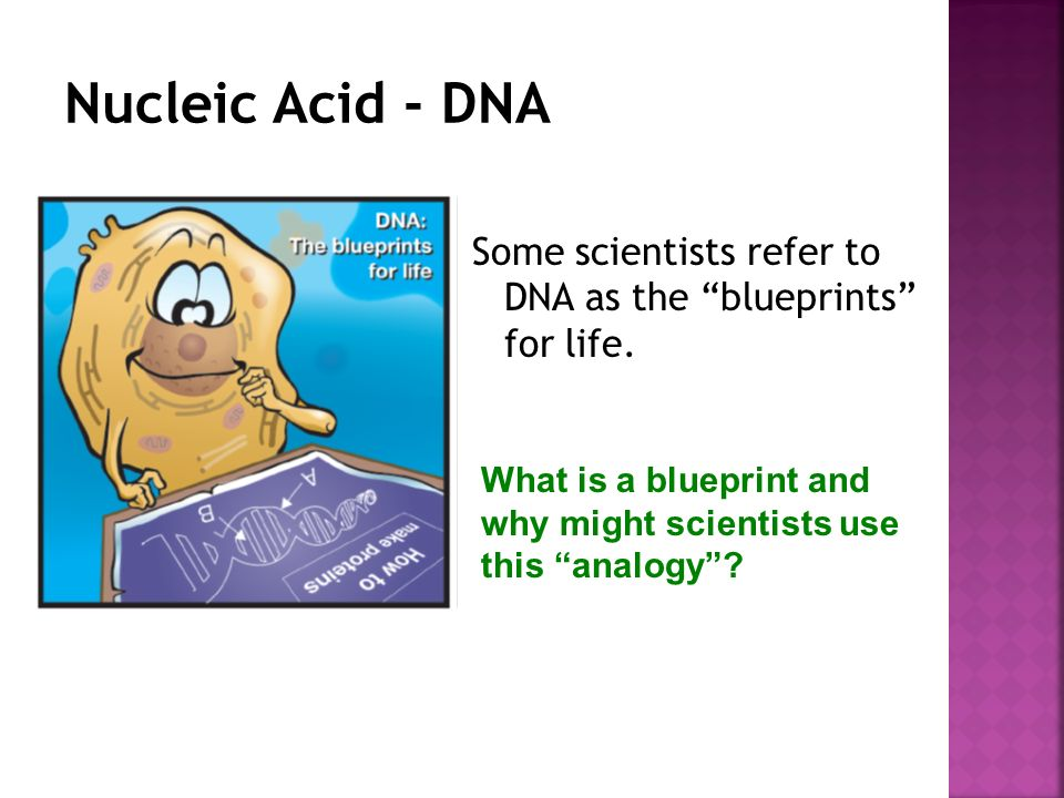 Biomolecules macromolecules compare the structures and functions of some scientists refer to dna as the blueprints for life malvernweather Gallery