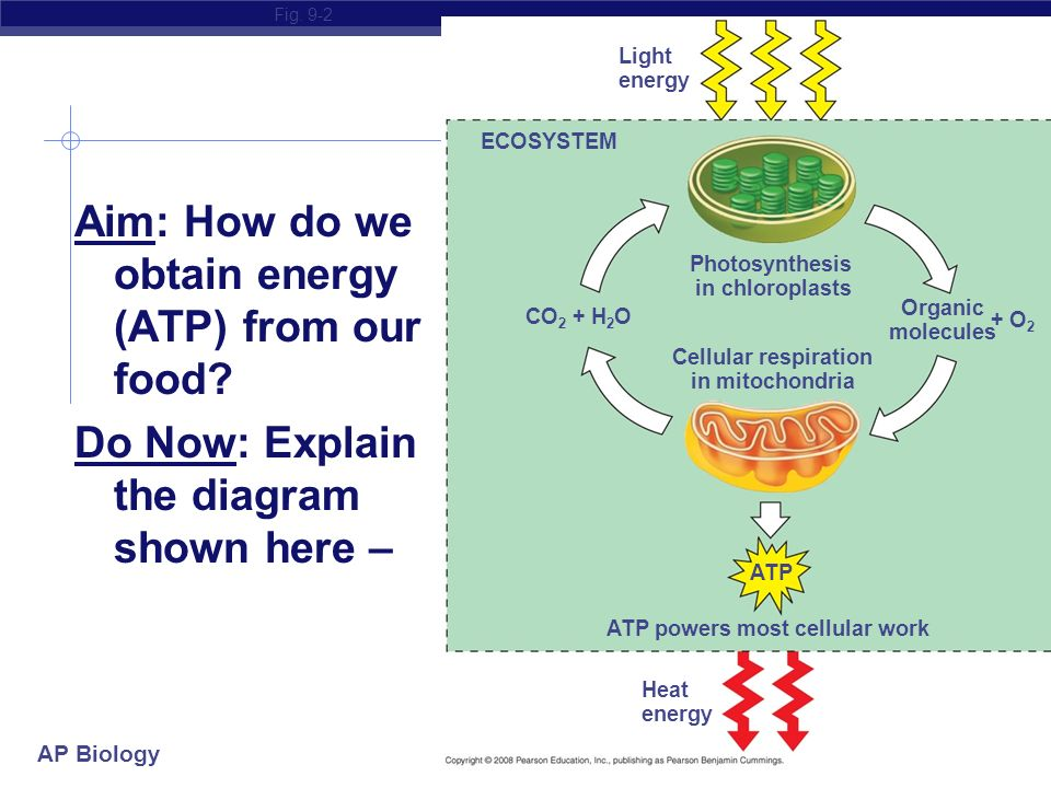 Ap biology aim how do we obtain energy atp from our food do now do now explain the diagram shown here fig 9 2 light energy ecosystem photosynthesis in chloroplasts co 2 h ccuart Gallery