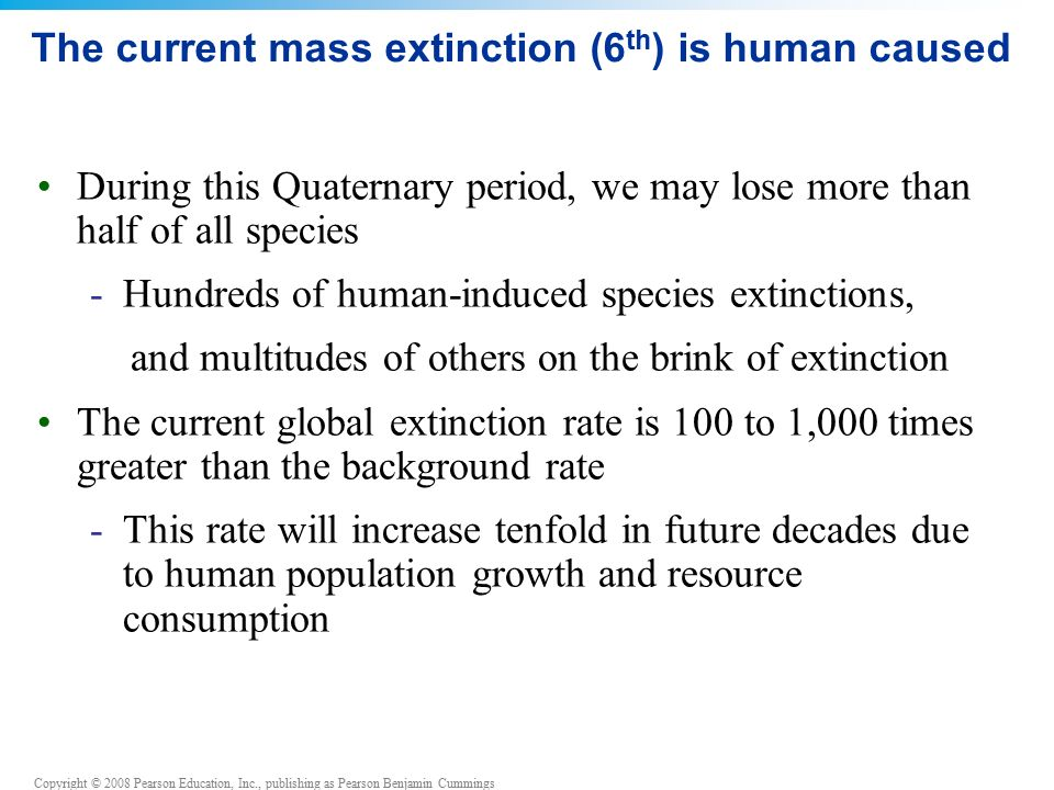Copyright © 2008 Pearson Education, Inc., publishing as Pearson Benjamin Cummings The current mass extinction (6 th ) is human caused During this Quaternary period, we may lose more than half of all species -Hundreds of human-induced species extinctions, and multitudes of others on the brink of extinction The current global extinction rate is 100 to 1,000 times greater than the background rate -This rate will increase tenfold in future decades due to human population growth and resource consumption