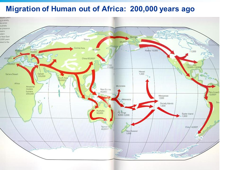 Copyright © 2008 Pearson Education, Inc., publishing as Pearson Benjamin Cummings Migration of Human out of Africa: 200,000 years ago