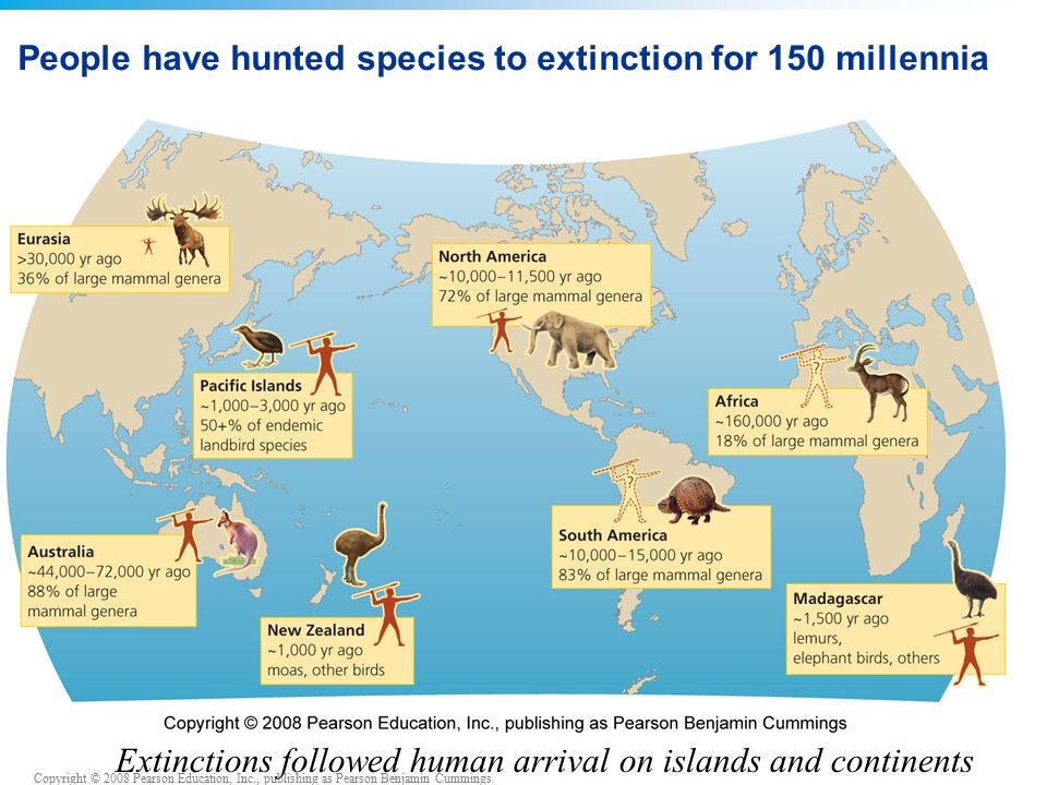 Copyright © 2008 Pearson Education, Inc., publishing as Pearson Benjamin Cummings People have hunted species to extinction for 150 millennia Extinctions followed human arrival on islands and continents