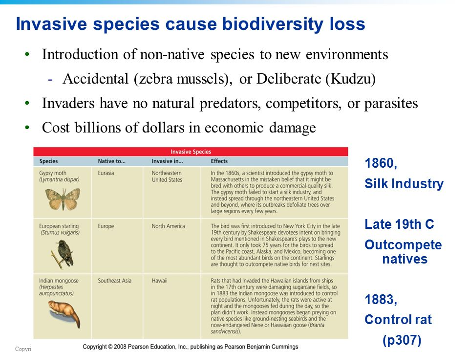 Copyright © 2008 Pearson Education, Inc., publishing as Pearson Benjamin Cummings Invasive species cause biodiversity loss Introduction of non-native species to new environments -Accidental (zebra mussels), or Deliberate (Kudzu) Invaders have no natural predators, competitors, or parasites Cost billions of dollars in economic damage 1860, Silk Industry Late 19th C Outcompete natives 1883, Control rat (p307)