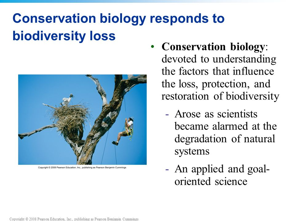 Copyright © 2008 Pearson Education, Inc., publishing as Pearson Benjamin Cummings Conservation biology responds to biodiversity loss Conservation biology: devoted to understanding the factors that influence the loss, protection, and restoration of biodiversity -Arose as scientists became alarmed at the degradation of natural systems -An applied and goal- oriented science