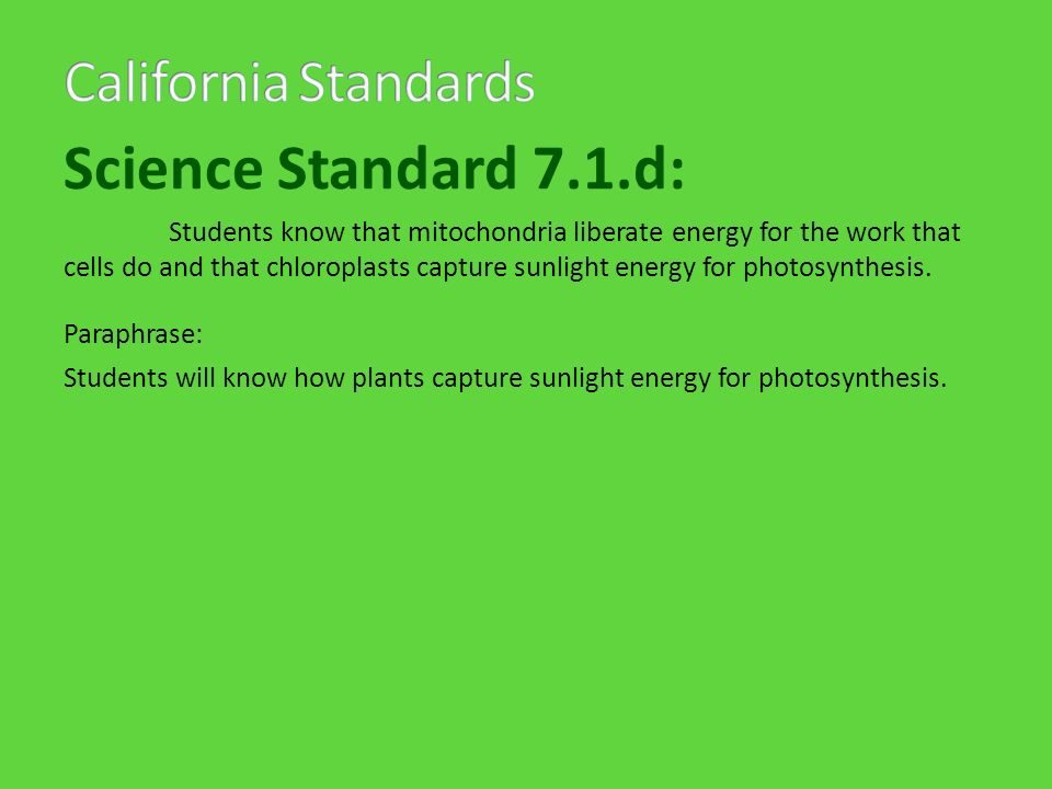 Science Standard 7.1.d: Students know that mitochondria liberate energy for the work that cells do and that chloroplasts capture sunlight energy for photosynthesis.