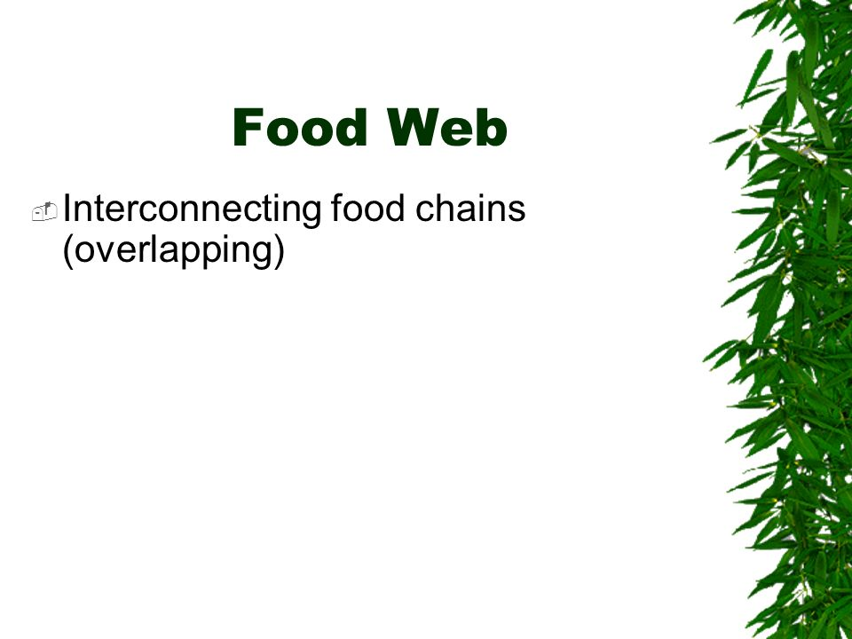 A Food Chain Plant Insects Fish Frog Bear People