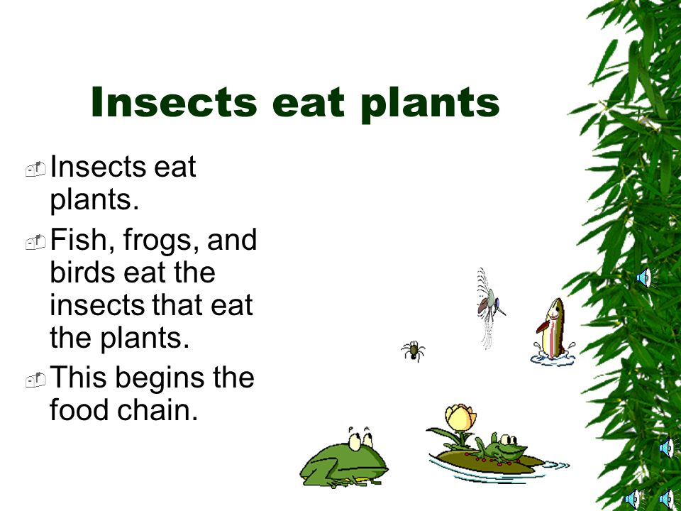 Omnivores  Omnivores will eat both plants and animals.
