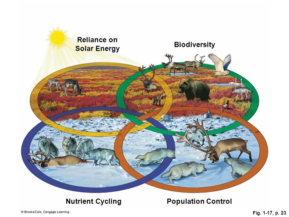 Fig. 1-17, p. 23 Population Control Reliance on Solar Energy Nutrient Cycling Biodiversity