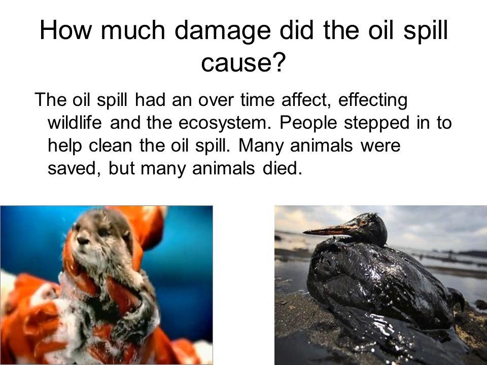 Exxon valdez oil spill damage per animal dissertation histoire sujet
