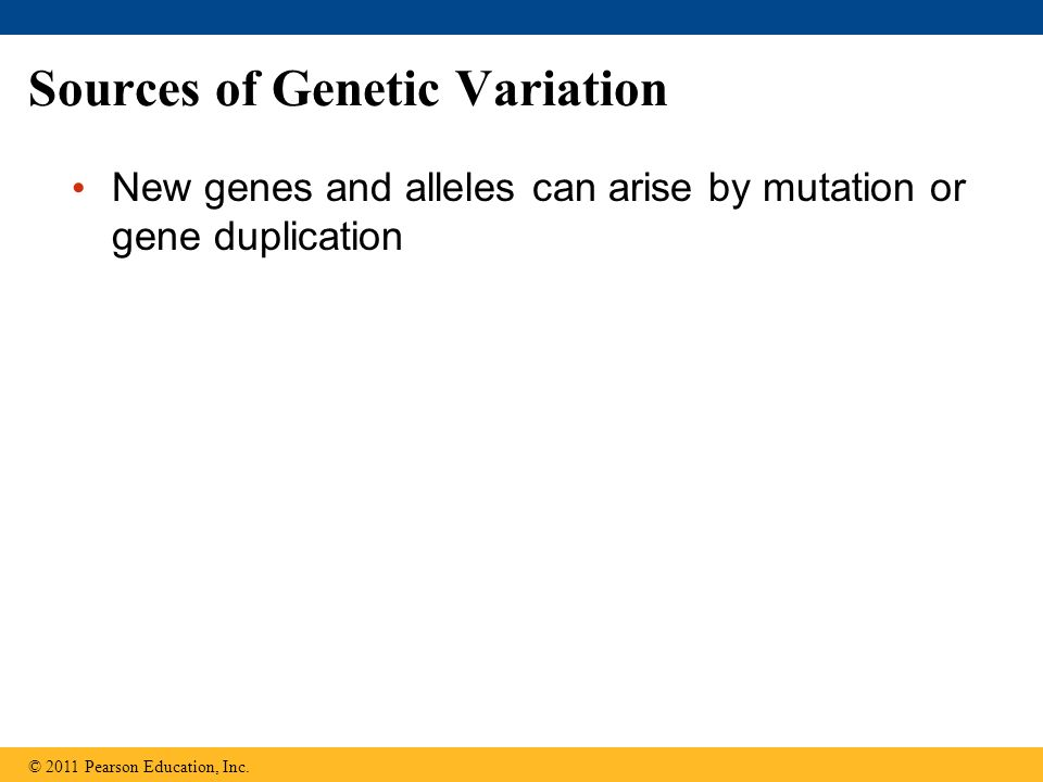 Sources of Genetic Variation New genes and alleles can arise by mutation or gene duplication © 2011 Pearson Education, Inc.