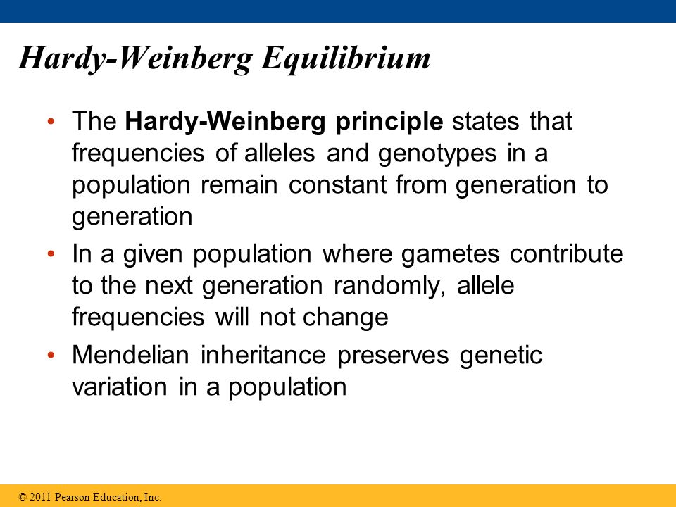 Hardy-Weinberg Equilibrium The Hardy-Weinberg principle states that frequencies of alleles and genotypes in a population remain constant from generation to generation In a given population where gametes contribute to the next generation randomly, allele frequencies will not change Mendelian inheritance preserves genetic variation in a population © 2011 Pearson Education, Inc.