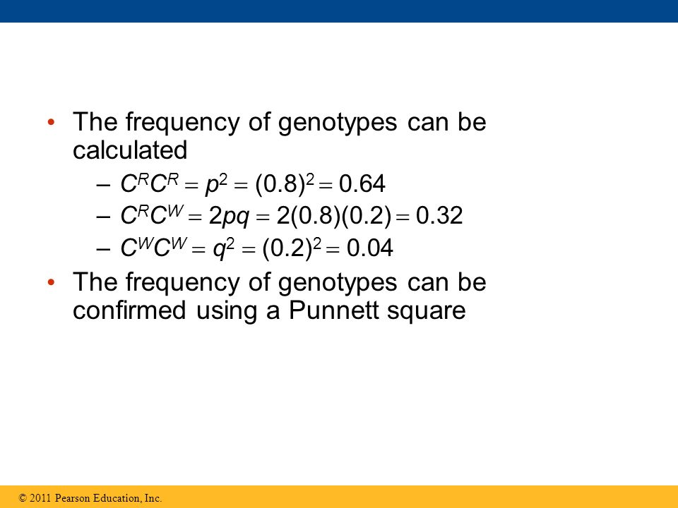 The frequency of genotypes can be calculated –C R C R  p 2  (0.8) 2  0.64 –C R C W  2pq  2(0.8)(0.2)  0.32 –C W C W  q 2  (0.2) 2  0.04 The frequency of genotypes can be confirmed using a Punnett square © 2011 Pearson Education, Inc.