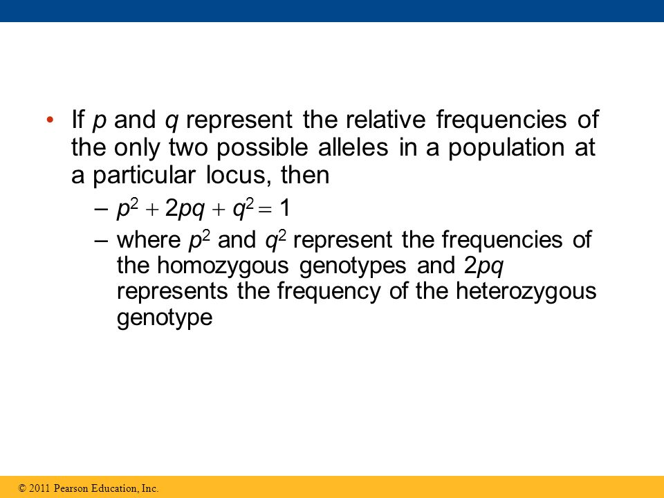 If p and q represent the relative frequencies of the only two possible alleles in a population at a particular locus, then –p 2  2pq  q 2  1 –where p 2 and q 2 represent the frequencies of the homozygous genotypes and 2pq represents the frequency of the heterozygous genotype © 2011 Pearson Education, Inc.