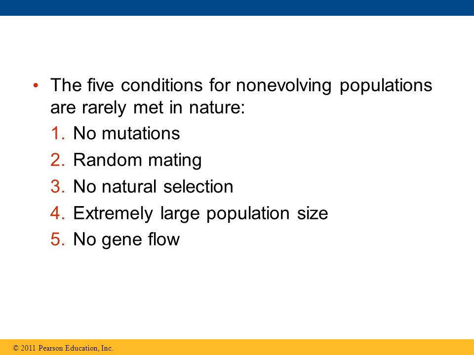 The five conditions for nonevolving populations are rarely met in nature: © 2011 Pearson Education, Inc.