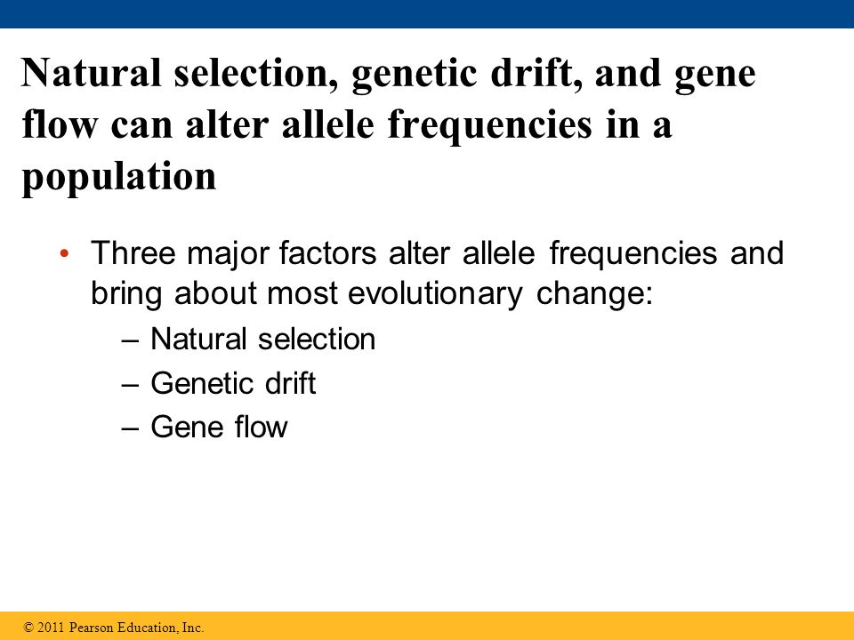 Three major factors alter allele frequencies and bring about most evolutionary change: –Natural selection –Genetic drift –Gene flow Natural selection, genetic drift, and gene flow can alter allele frequencies in a population © 2011 Pearson Education, Inc.
