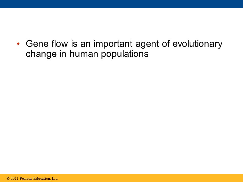 Gene flow is an important agent of evolutionary change in human populations © 2011 Pearson Education, Inc.