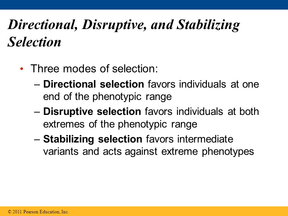 Directional, Disruptive, and Stabilizing Selection Three modes of selection: –Directional selection favors individuals at one end of the phenotypic range –Disruptive selection favors individuals at both extremes of the phenotypic range –Stabilizing selection favors intermediate variants and acts against extreme phenotypes © 2011 Pearson Education, Inc.