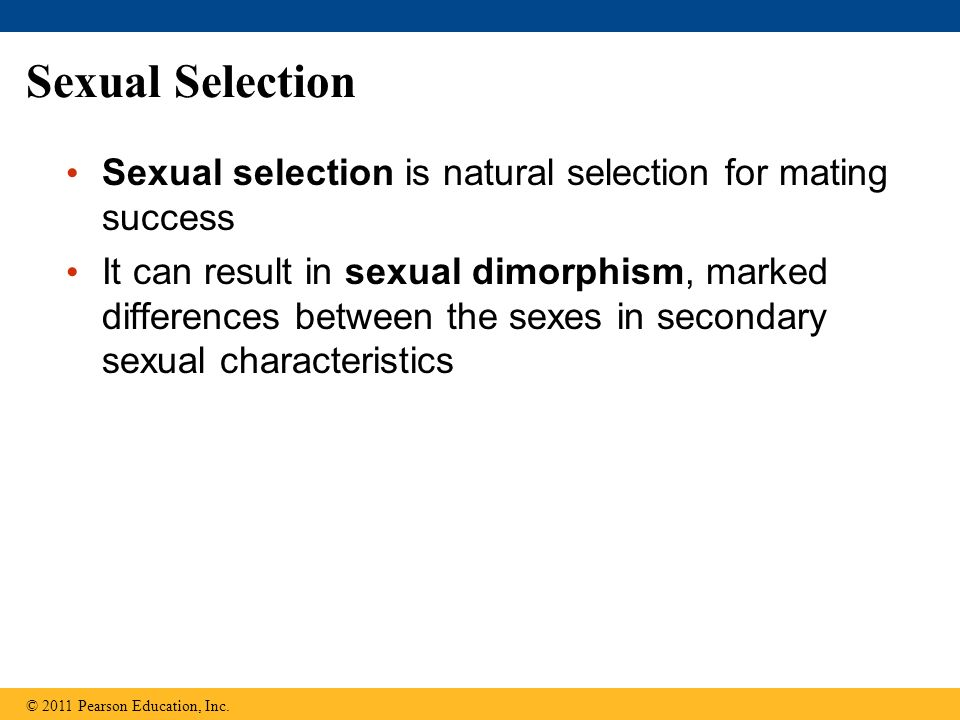 Sexual Selection Sexual selection is natural selection for mating success It can result in sexual dimorphism, marked differences between the sexes in secondary sexual characteristics © 2011 Pearson Education, Inc.