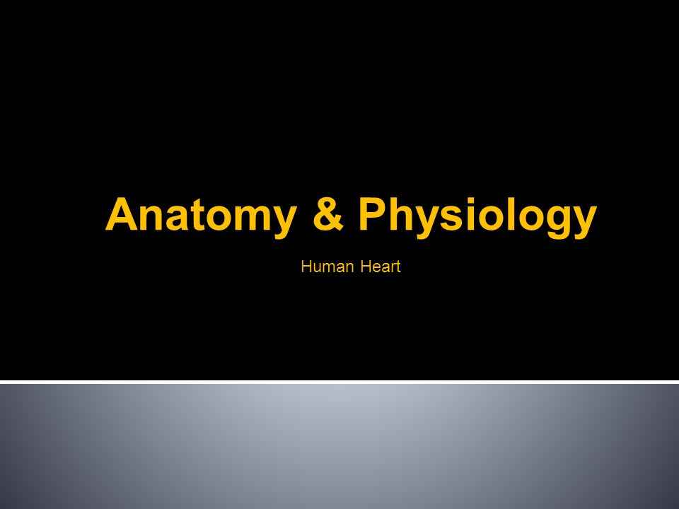 Human Heart Anatomy & Physiology. Basics Where is your heart? What ...