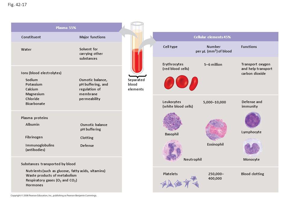 korrektur calcium albumin