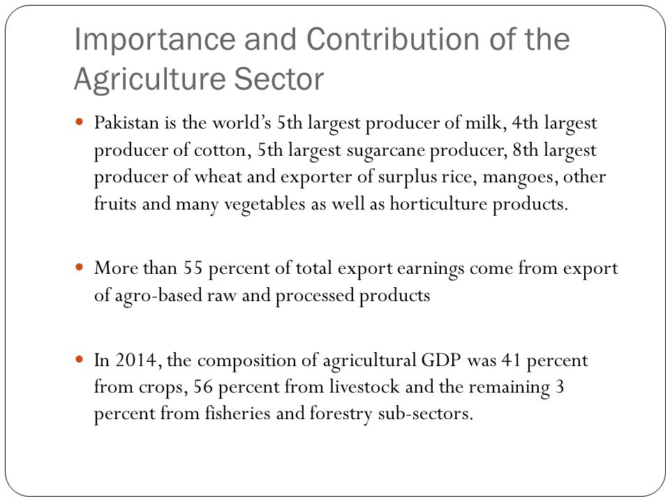 Importance and Contribution of the Agriculture Sector Pakistan is the world's 5th largest producer of milk, 4th largest producer of cotton, 5th largest sugarcane producer, 8th largest producer of wheat and exporter of surplus rice, mangoes, other fruits and many vegetables as well as horticulture products.
