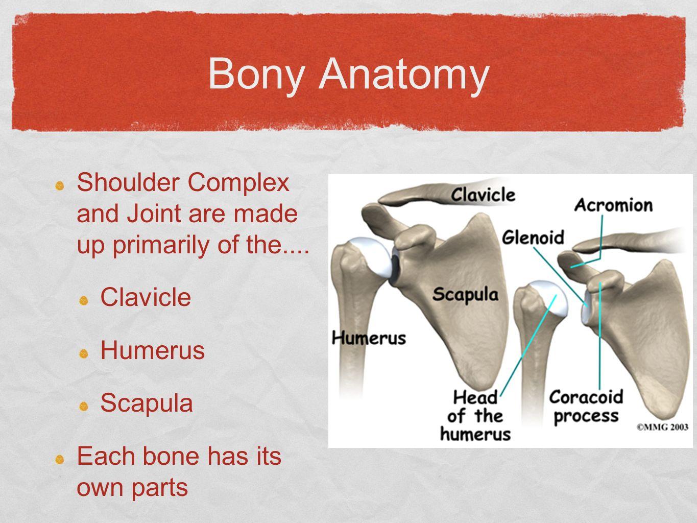 Bony anatomy of shoulder