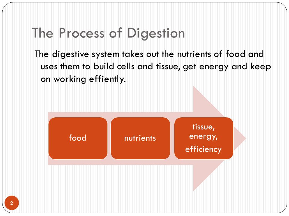 a description of the processes in digesting the food we eat