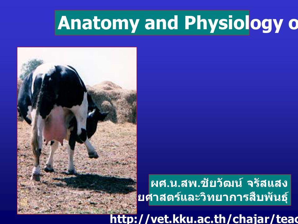 Anatomy and Physiology of Animals ผศ. น. สพ. ชัยวัฒน์ จรัสแสง ภาค ...