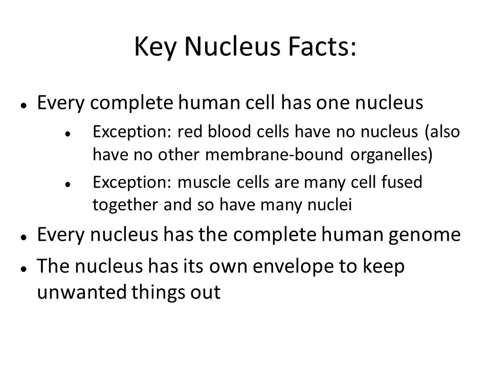 cells part 2. parts of the eukaryotic cell (organelles) nucleus, Muscles