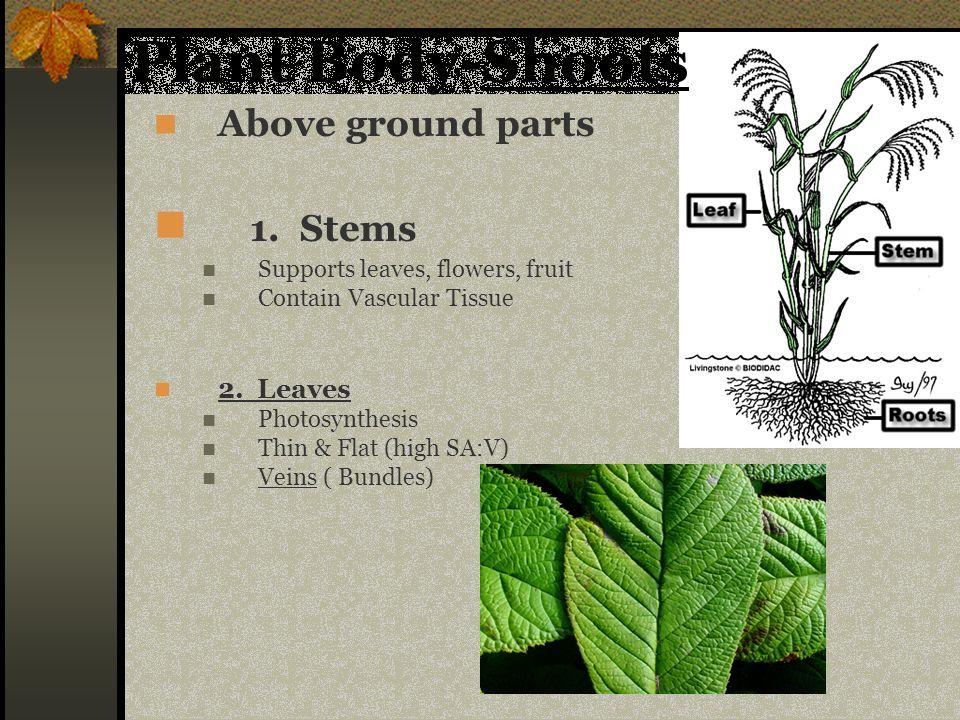 Livingstone Biodidac Leaf