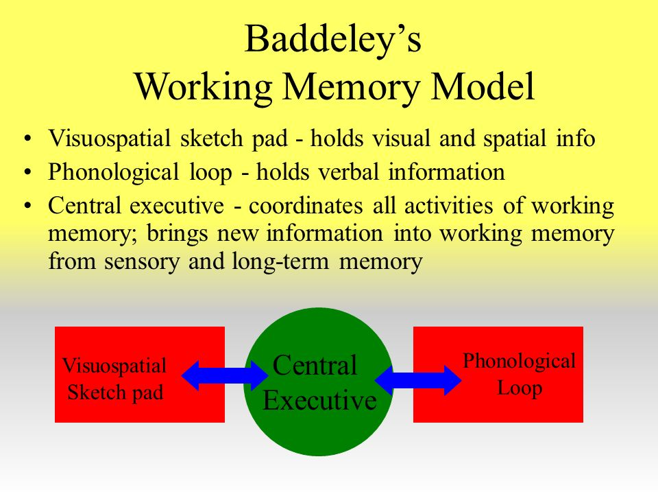 critically evaluate baddeley s working model of memory Critically evaluate baddeley s working model of memory essays and research papers critically evaluate baddeley s working model of memory evaluate the working memory introduction human memory is a complex cognitive structure, which can be defined in many ways.