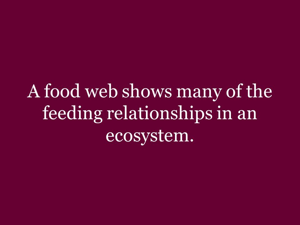 A food chain is a sequence in which energy is transferred from one organism to the next as each organism eats another.