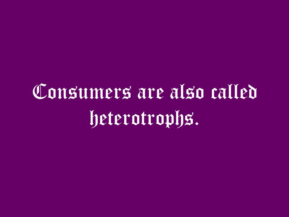 Another type of organism found in the ecosystem is the consumer.
