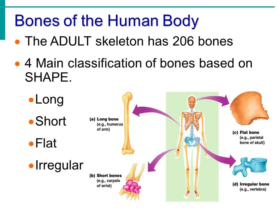 Nett Essentials Of Human Anatomy And Physiology Marieb Fotos ...