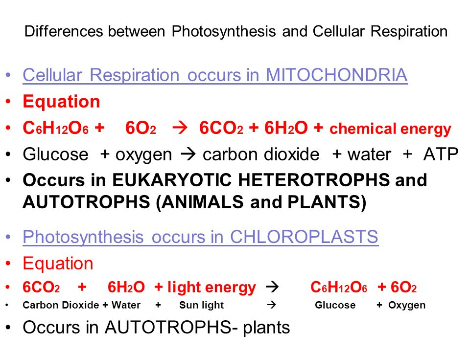 6 describe the similarities and differences between photosynthesis and cell respiration Study guide: metabolism, cellular respiration and plant describe the similarities and differences between cellular respiration and plant photosynthesis.