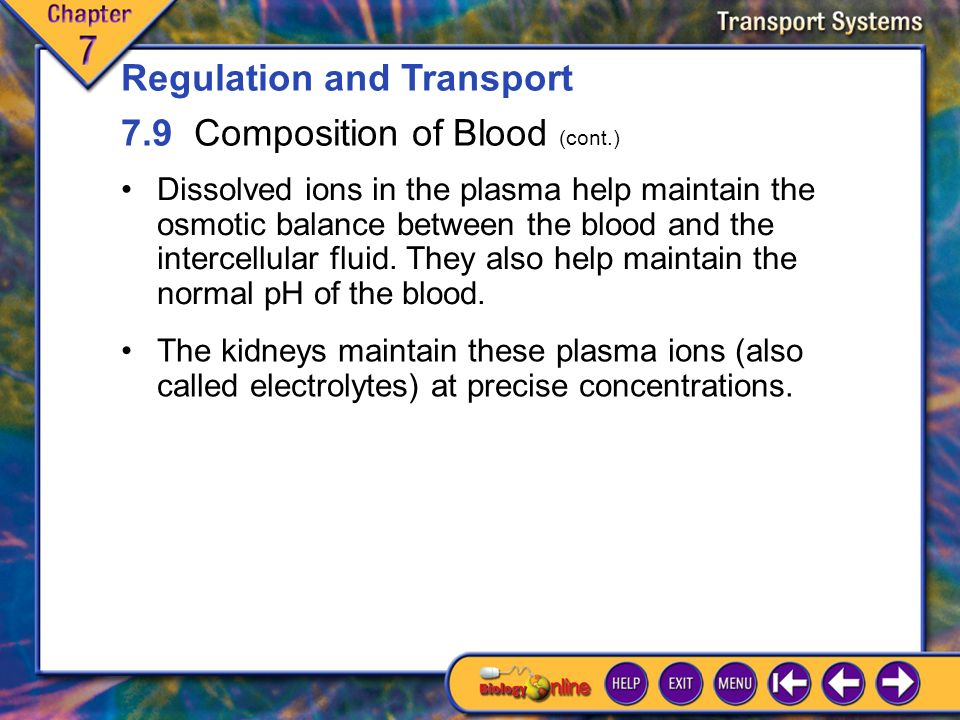 7.9 Composition of Blood 5 The fluid portion of the blood, called plasma, consists of water, proteins, dissolved ions, amino acids, sugars, and other substances.