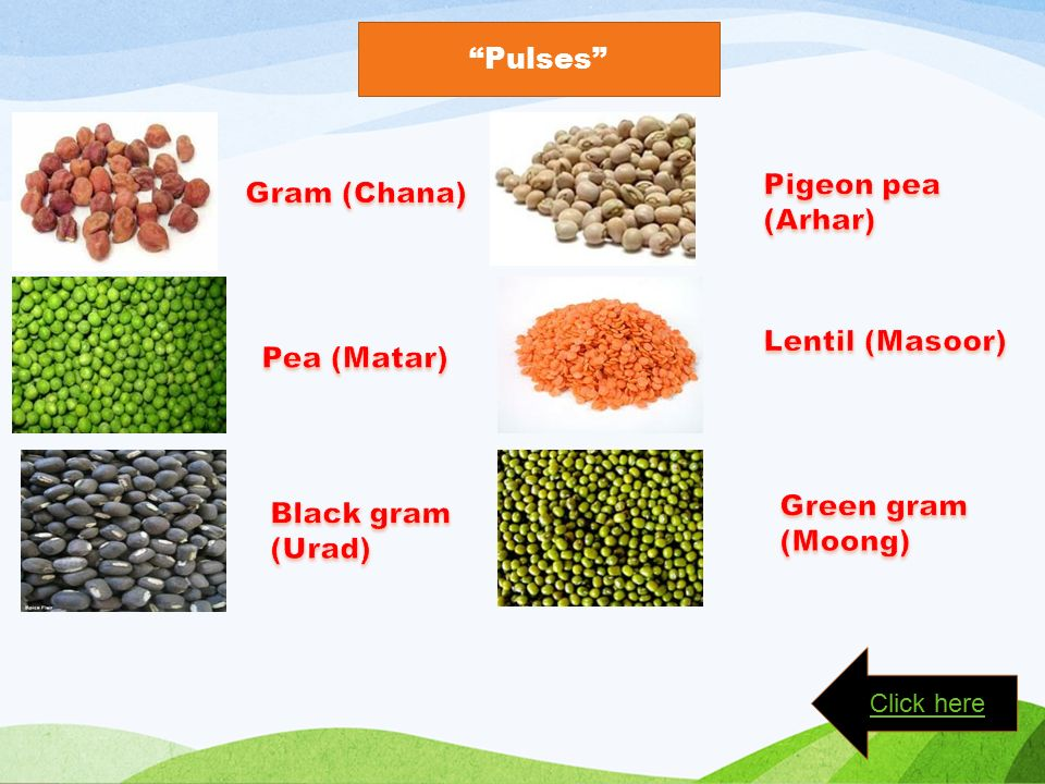 Pulses Click here